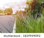 Roadside Grass Flowers Blooming ...