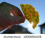 Autumnal Colored Ginkgo Leaf I...