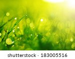 Green Wet Grass With Dew On A...
