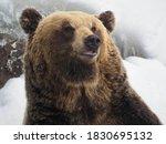 Brown Bears In Noboribetsu Bear ...