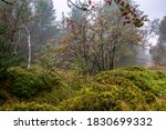 Landscape Of The Foggy Forests...