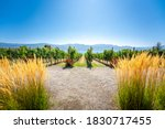 Okanagan wine country in Western Canada, British Columbia. Landscape