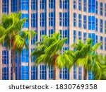 Tops Of Tall Palm Trees In A...