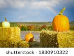 Three Pumpkins And Rainbow In...