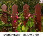 Red Wooden Fence Entwined From...