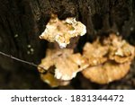 this is mushrooms photo for you ...   Shutterstock . vector #1831344472