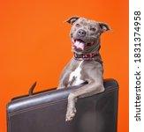 Studio Shot Of A Dog On An...
