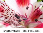 Colorful Flower Detail ...