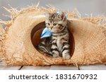 Portrait Of A Cute Tabby Kitten ...