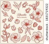 set with hibiscus sabdariffa or ...   Shutterstock .eps vector #1831719322