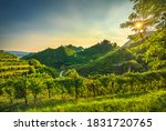 Prosecco Hills  Vineyards At...
