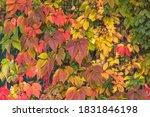 Bright Colors Of Autumn. Golden ...