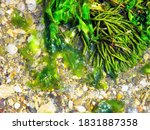 Close Up High Contrast Image Of ...