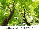 trees with green leaves canopy... | Shutterstock . vector #183190142