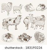 carcaça,costeleta,coleção,ovelha,agricultura,imagem,cordeiro,pecuária,carne,carneiro,cremalheira,memória ram,assado,esboço,legumes