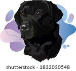 Black Labrador Head Vector...