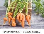 A Few Deformed  Ugly Carrot...