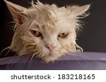 Stock photo dirty wet cat 183218165
