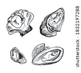 Vector Images Of Oyster And...