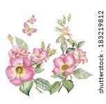 watercolor roses isolated on a...   Shutterstock . vector #183219812