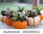 Mini Pumpkin Succulent...