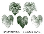 set of grape leaves with details | Shutterstock .eps vector #1832314648
