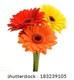 Bouquet Of Gerberas On A White...