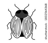 Insect Animal Blackandwhite Fly ...