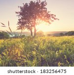 summer meadow | Shutterstock . vector #183256475