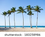 Tall Palm Trees In A Row At...