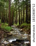 Babbling Brook In Redwood Forest