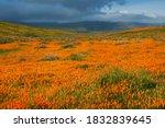 Usa  California  Mojave Desert. ...