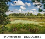 Wetland Scene In A Conservation ...