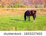 Brown Horse At Pastureland In...