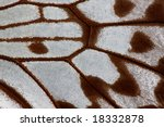Detail of butterfly wing - stock photo