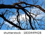 Light On Heavy Bare Branches...