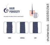 hair porosity types... | Shutterstock .eps vector #1833501565