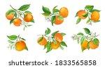 Mandarin Branches Vector...