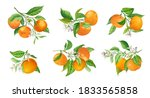 mandarin branches vector... | Shutterstock .eps vector #1833565858