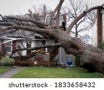 A Large Tree Lays On Top Of A...