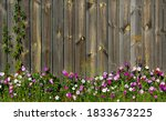 Beautiful Flowers In Front Of A ...
