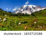 Mountain Rainier From The...