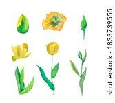 Set Of Watercolor Tulips In...