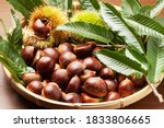 Chestnuts In Burrs And...