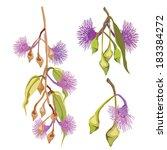 eucalyptus tree purple flowers... | Shutterstock .eps vector #183384272