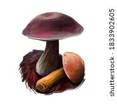 Aureoboletus Mirabilis Mushroo...