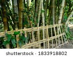 Bamboo Tree Trunks That Thrive...
