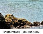 Cormorants Resting On A Rock By ...