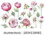 big set peonies  pink bud  dew... | Shutterstock . vector #1834118482