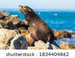A sea lion sunning on the rocks